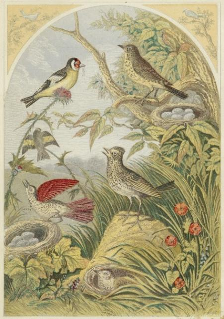 bird-images-65