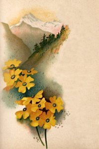 floral-pictures-1-