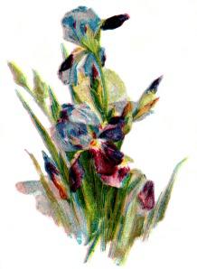 drawings-of-flowers-2