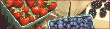 berries_banner