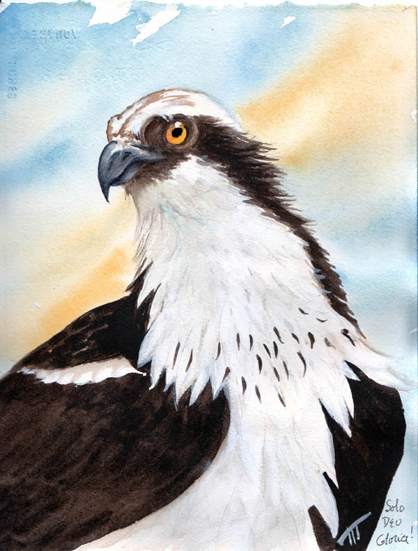 PAINTINGS - OSPREY