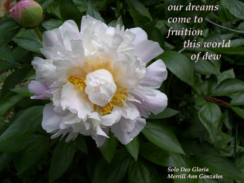 Haiga - our dreams - 5-31-11 copy