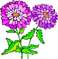 Asters_1