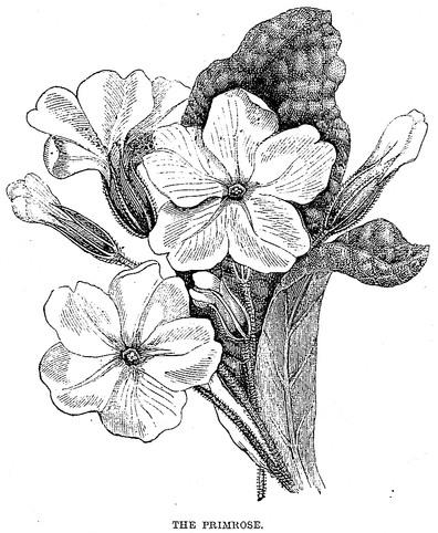 bw-flowers-19
