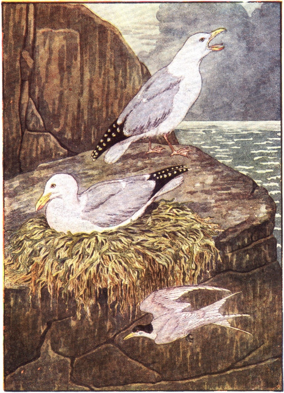 seagull-nest