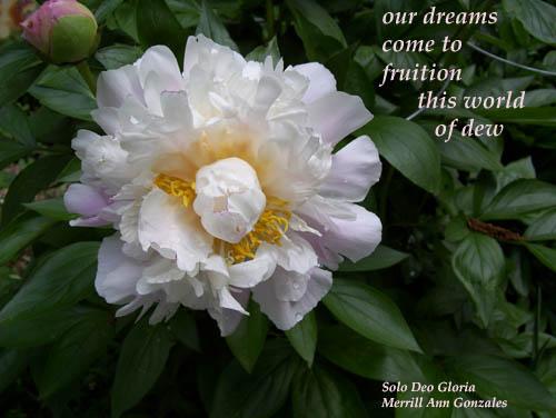 Haiga - our dreams - 5-31-11 copy
