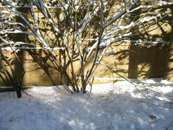 Winter garden - I watch the light through the year.