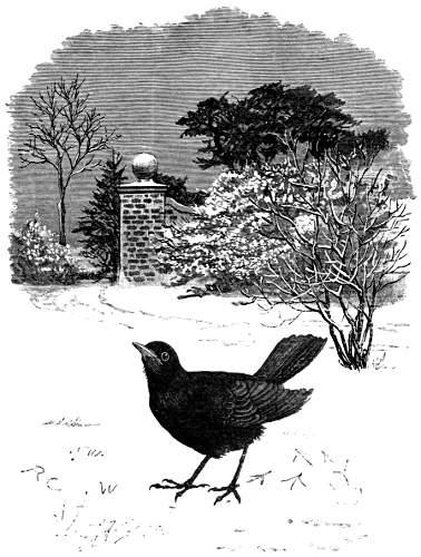 bird-images-27