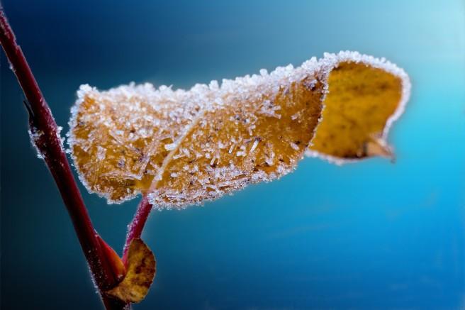 frosted_leaf.jpg