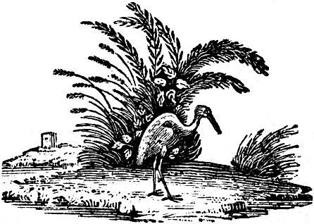 heron-bewick