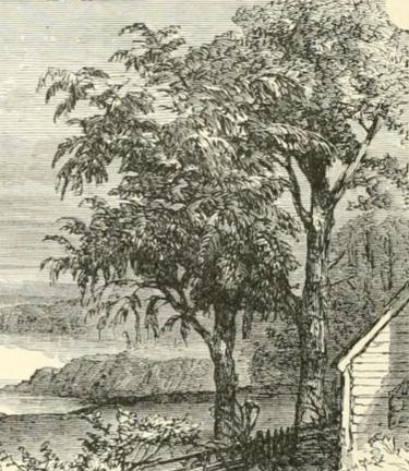 trees-14