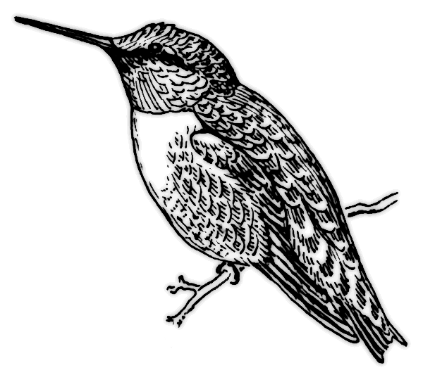 hummingbird_2_BW