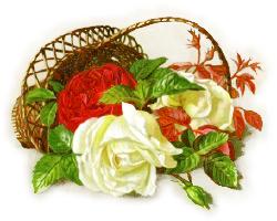 basket_red_white_roses
