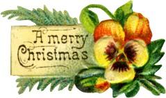 pansy-christmas