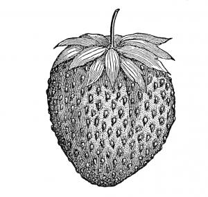 strawberry-300x285