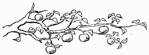 fruit-08