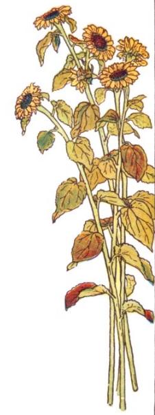 sunflowers-03