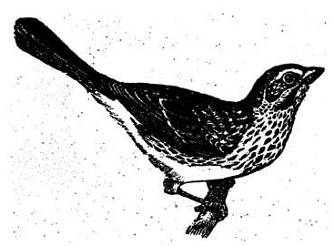 birds-13